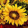 Sunflowers by David Kay