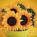 Sunflowers In Vase by Elena Elisseeva
