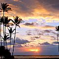Sunrise Between Palms by Stacy Egnor