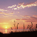 Sunset Over The Sea, Venice Beach by Panoramic Images