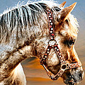 Sunset Pony by Kathryn Swaffield