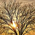 Sunset Tree by Gary Richards