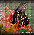 Swallowtail by Travis Truelove