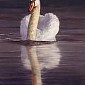 Swan by David Stribbling