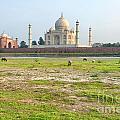 Taj Mahal by Yew Kwang