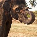 Temple Elephants Maharaja's Palace India Mysore by Carol Ailles