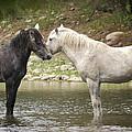 Tender Moments - Wild Horses  by Saija  Lehtonen