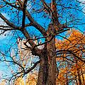 Texture Of The Bark. Old Oak Tree by Jenny Rainbow