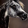 The Arabian Horse by Angel Ciesniarska