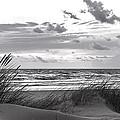 The Beach  by Alex Hiemstra
