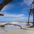 The Beach At Hunting Island State Park by Louise Heusinkveld