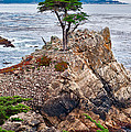The Famous Lone Cypress Tree At Pebble Beach In Monterey California by Jamie Pham