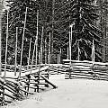 The Fence Of Kovero by Jouko Lehto