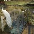 The Foot Bridge by Fran J Scott