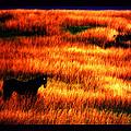 The Golden Grain Of A Sunset Dream by Susanne Still