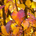 The Heart Of Fall by Nick Kirby