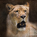 The Lioness by Jai Johnson