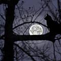 The Moon Watcher by Susan Leggett