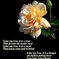 The Rose by AJ  Schibig