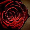 The Rose Digital Art by Ernie Echols