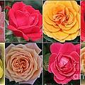 Spring Time Roses by Dora Sofia Caputo Photographic Design and Fine Art