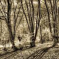 The Spring Forest by David Pyatt