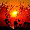 Thistles In The Sunset by Andrea Lawrence