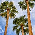 Three Palms Palm Springs by William Dey