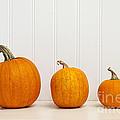 Three Pumpkins by Elena Elisseeva
