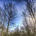 Through The Trees by David Pyatt