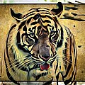 Tiger Tongue by Alice Gipson