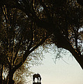 Tom Mix Monument To His Horse Tony Near Florence Arizona 1984 by David Lee Guss