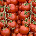 Tomato On The Vine by Lee Avison