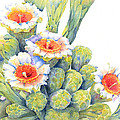 Top Bloomers by Deb  Harclerode