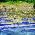 Torch River Water Lilies by Michelle Calkins