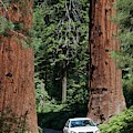 Tourism In Sequoia National Park by Jim West