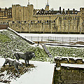 Tower Of London  by Tony Hart-Wilden