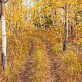 Trail In Golden Aspen Forest by Stephan Pietzko