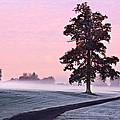 Tree At Dawn / Maynooth by Barry O Carroll