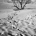Tree Branch And Footprints On Sleeping Bear Dunes by Randall Nyhof
