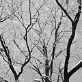 Tree Branches by Dan Radi