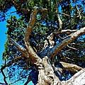 Tree Climbing Paradise by Kimberly Dawn Clayton
