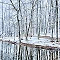 Tree Line Reflections In Lake During Winter Snow Storm by Alex Grichenko