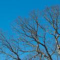 Tree Profile by Gaurav Singh