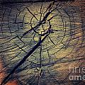 Tree Texture Background by Mythja  Photography