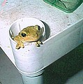 Treefrog by Robert Floyd