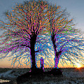 Trees Aglow by Bruce Nutting