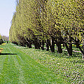Trees Along A Walkway In A Botanical by Panoramic Images