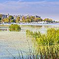 Trees And Reeds Close To The River by Alain De Maximy