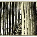 Trees by Dale Stillman